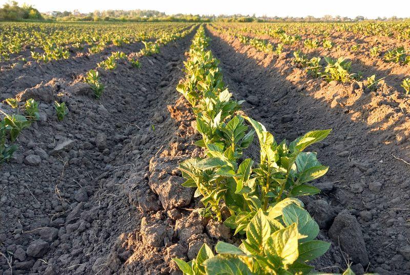 Actualite Actualite 16% des fermes de la province de Liège ont opté pour le bio dont le succès se confirme