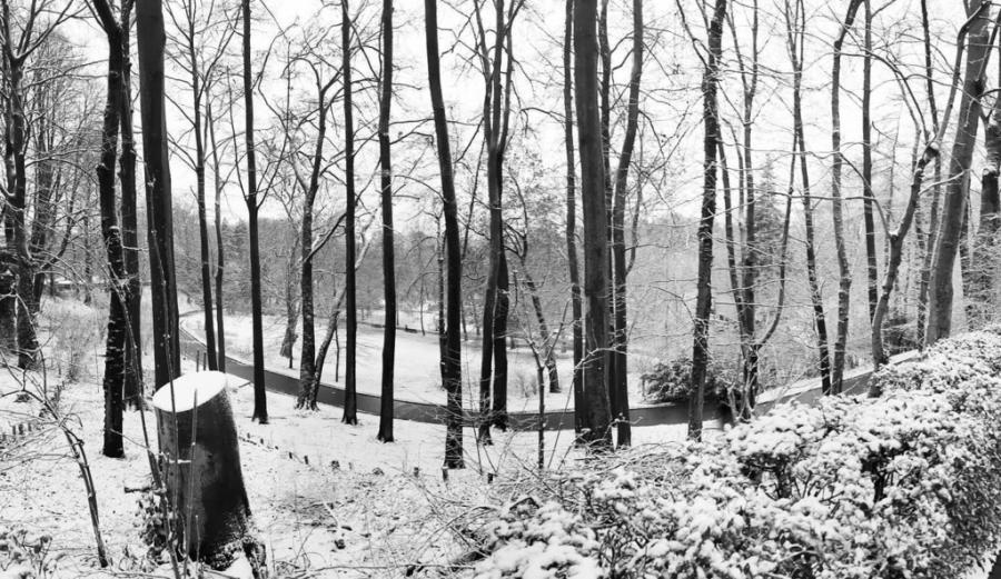 Actualite Actualite Bruxelles sous la neige : les images de ce dimanche